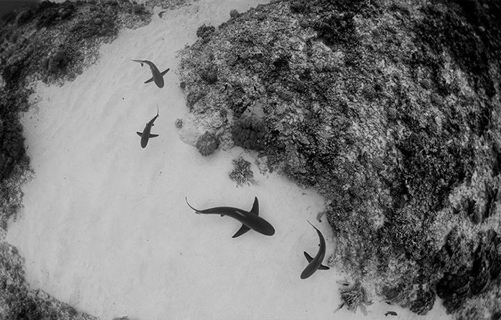 大多数人,用什么杀死海洋生物?