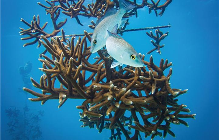 豪利時與國際珊瑚修復基金會展開合作?進一步踐行海洋守護事業